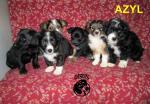 """Schronisko """"AZYL"""" Bia�a Podlaska prosi o adopcje i pomoc !"""