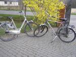 Sprzedam rowery Gazelle