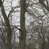 210222-drzewa-05