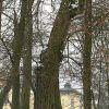 210222-drzewa-07